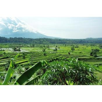 Reise nach Bali - Palmblattbibliotheken - 9 Tage
